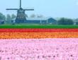 去看这世界上最美的农田