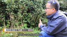 陸俊敏:鄉村振興走出的新茶人