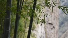 浙江電視臺公共新聞頻道《美麗鄉村浙江行》8月25日播出12分鐘