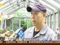 植物園龜甲牡丹開花