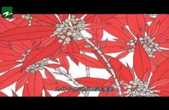20190426《中国蓝·书画园地》:第182期——往事并不如烟系列之孙晴义·装饰的山水画(中)
