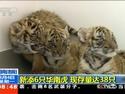 河南:新添6只华南虎