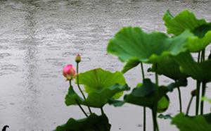黃梅落雨天 青草池塘處處花