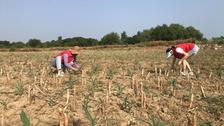 灌溉一片玉米地,滋潤一種農戶心