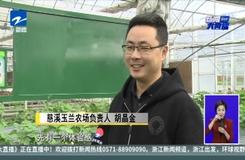 """慈溪新品""""冰淇淋""""草莓閃亮上市  每斤200元"""