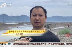 兩只海豚在海灘擱淺  寧??h緊急開展救援