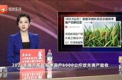1603.9公斤!袁隆平團隊創雜交水稻雙季畝產新紀錄